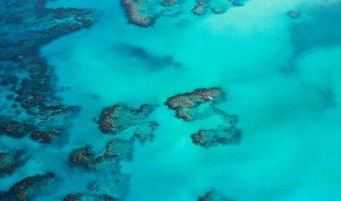 ג׳מייקה