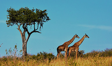 טנזניה וזנזיבר
