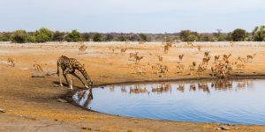 חיות בר בדרום אפריקה