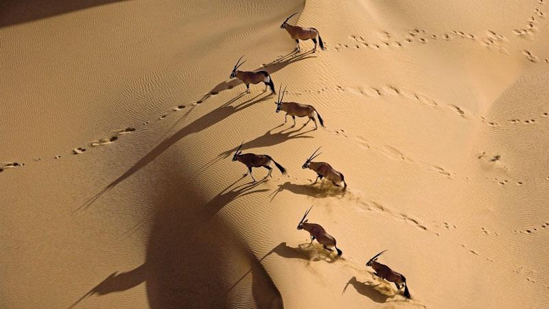 טיול במדבר נמיביה