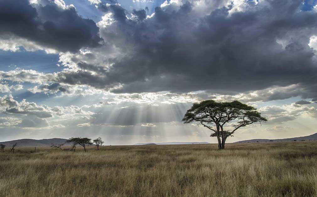 נוף בדרך אל הר הקילימנגרו