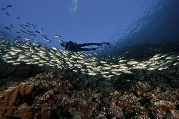 צוללן באיי גלפגוס